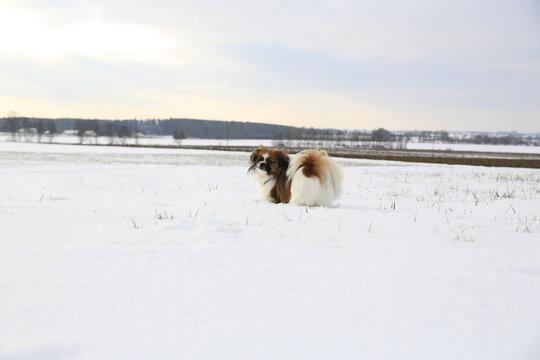 Kleiner Hund in einer wunderschönen Winterlandschaft