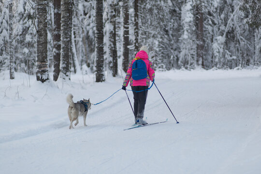 Walk with your dog in the forest in winter. Golden retriever.
