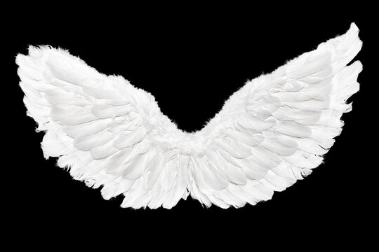 White Angel Wings Isolated on Black