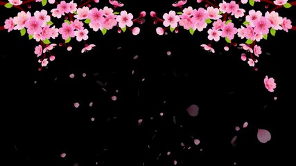 Wall Mural - 4K Pink Cherry blossom branch with falling petals animation. Motion Japanese spring sakura alpha background