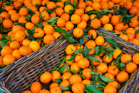 Basket of orange clementine fruit from Corsica with foliage