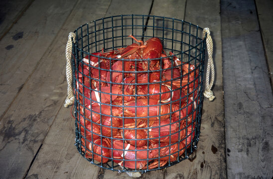Closeup of a basket of crayfish on the Southwest Harbor in Maine
