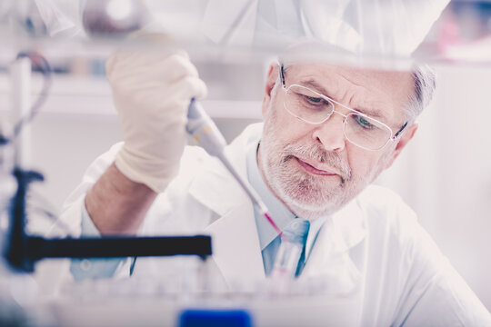 Senior life scientist researching in laboratory. Life sciences comprise fields of science that involve the scientific study of living organisms.
