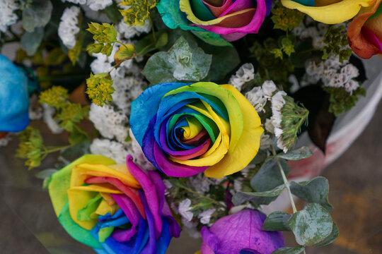 rainbow roses in a garden
