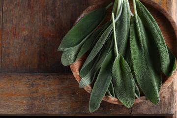 Fototapeta fresh organic green herb sage obraz