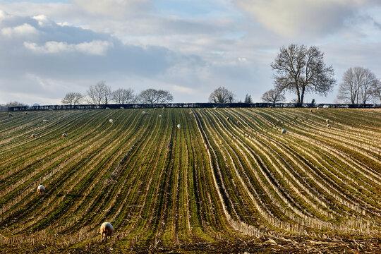plowed field in the morning
