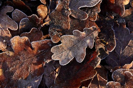 leaf on the ground