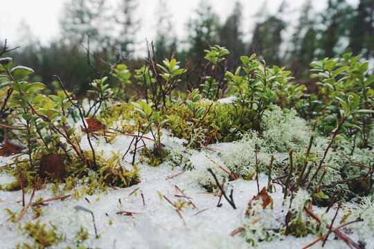 Close-up Of Plants Against Trees During Winter