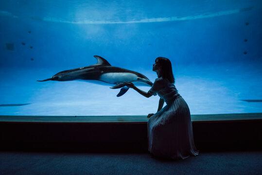 イルカ遊び