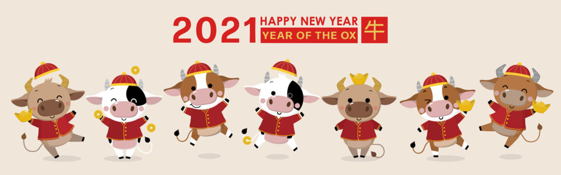 Happy Chinese new year greeting card. 2021 Ox zodiac. Cute cow in red costume and gold money. Animal holidays cartoon character. Translate: Ox. -Vector