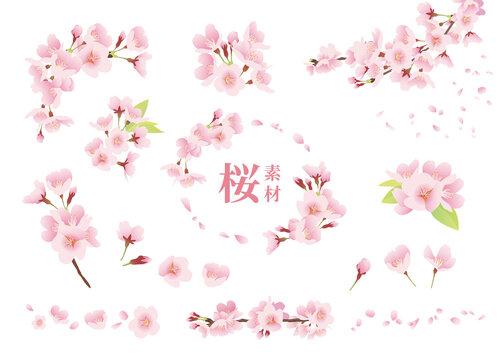 桜の花 イラスト素材 ワンポイント、装飾、デザインパーツ(カラー、線なし、白背景)