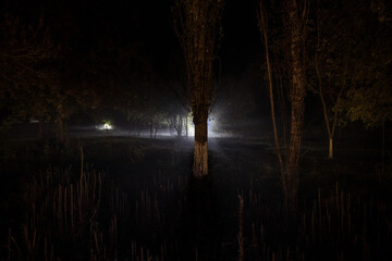 strange light in a dark forest at night. Silhouette of person standing in the dark forest with...