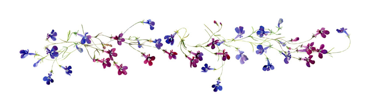 Watercolor horizontal composition of blue and red lobelia flowers