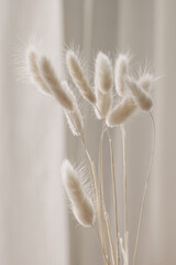 Close-up of beautiful creamy dry grass bouquet. Bunny tail, Lagurus ovatus plant against soft blurred beige curtain background. Selective focus. Floral home decoration. Vertical.