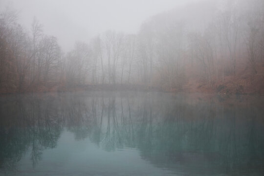 Foggy forest and reflection on water