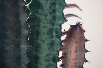 Close Up Cactus Plant