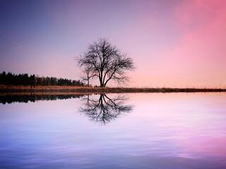 Obraz Bare Tree By Lake Against Romantic Sky At Sunset - fototapety do salonu