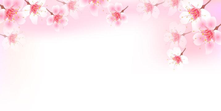 桜 風景 春 背景