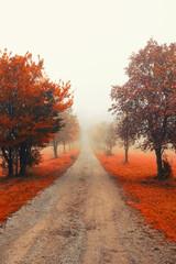 misty autumn tree alley
