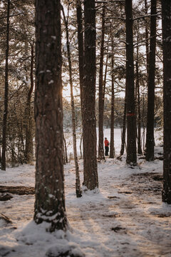 winter forest in the snow with a woman in the distance