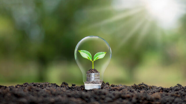 A tree growing on a coin in a light bulb plus a blurred green natural background earth day energy saving and environmental concept.