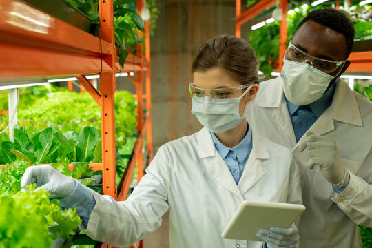 Young agroengineers standing in aisle between shelves with green seedlings