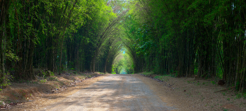 Tunnel bamboo trees and walkway : Thailand