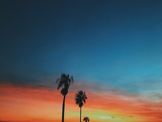 Fototapeta Low Angle View Of Silhouette Coconut Palm Trees Against Sky During Sunset obraz