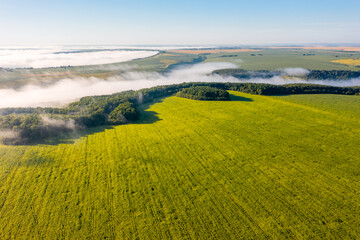 Wall Mural - Aerial top view of green rural land and cultivated fields.