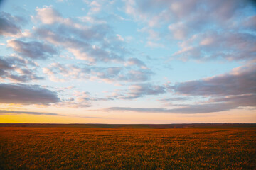 Wall Mural - Attractive evening sky of agrarian land. Fresh vibrant colors.