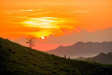 Obraz Scenic View Of Field Against Orange Sky - fototapety do salonu