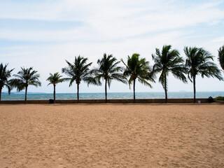 Palm Trees On Beach Against Sky Wall mural