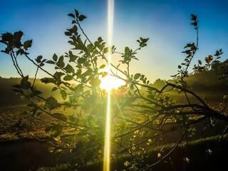 Obraz Low Angle View Of Sunlight Streaming Through Tree - fototapety do salonu