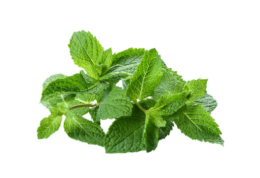 Leaves of fresh mint on white background