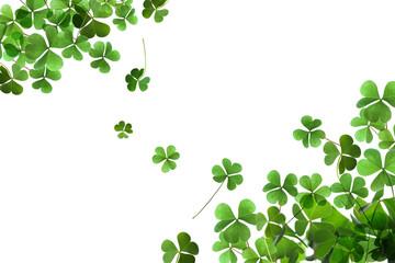 Fototapeta Fresh green clover leaves on white background. St. Patrick's Day obraz