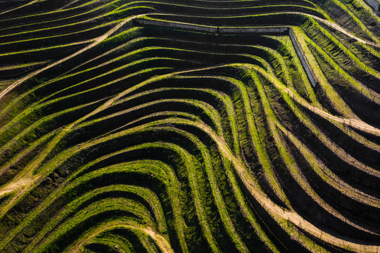 Aerial view of vineyards terraces in Douro Valley, Portugal
