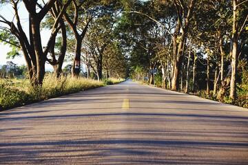 Empty Road Along Trees Fotobehang