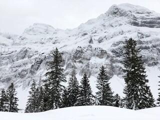 Obraz Snow Covered Pine Trees Against Mountain - fototapety do salonu