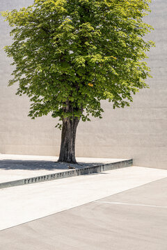 Slovenia, Ljubljana, Monument to the Victims of All Wars (Spomenik rtvam vseh vojn), Tree on town square