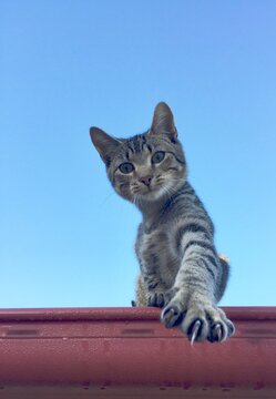 Low Angle View Of A Cat Looking Away Against Blue Sky