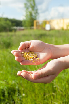spreading grass seed in spring by hand for the perfect lawn. Sowing Grass Seed By Hand.