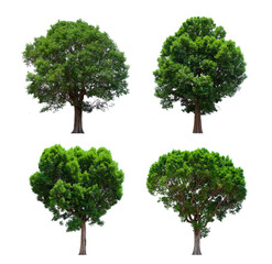 isolated tree green set is located on a white background. Collection of isolated tree green on...