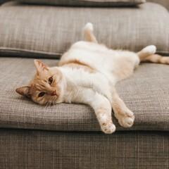 Obraz Close-up Of A Cat Resting On Sofa - fototapety do salonu