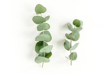 Green leaves eucalyptus isolated on white background. Flat lay, top view.