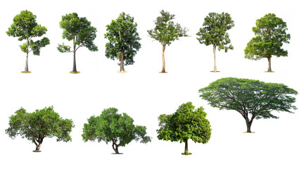 .Trees collection isolated on white background.