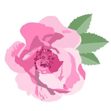 Róża - wektor