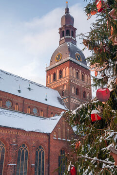 Riga, Latvia. Christmas Tree On The Dome Square With Riga Dome Cathedral. Christmas Tree And Famous Landmark.