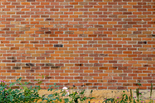 Full frame texture background of a 19th century traditional red clay brick wall with normal aging and weathering from age, with view of green foliage near ground level
