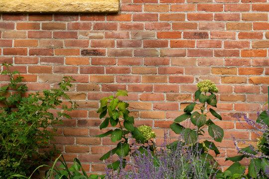 Full frame texture background of a 19th century red clay brick wall with normal aging and weathering from age, with view of garden foliage at the bottom