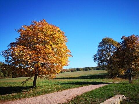 Kastanienbaum im Walbachtal